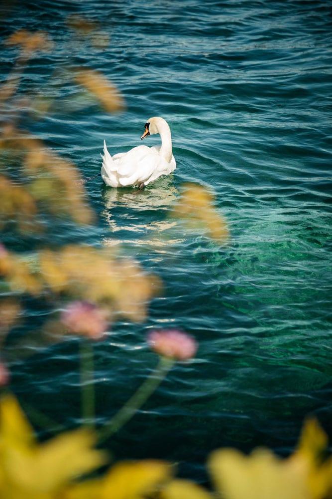 visiter lac Léman Genève en Suisse week-end nature