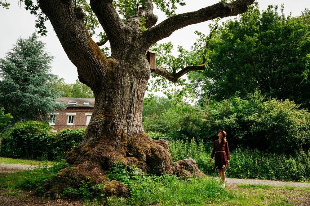 chêne à la vierge Elbeuf