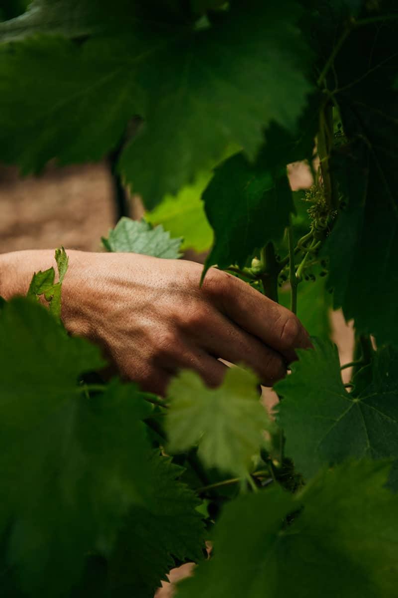 faire les domaines viticoles à Beaucaire