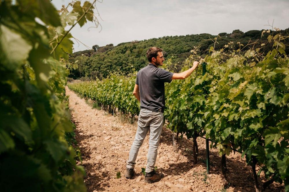 rencontrer des vignerons à Beaucaire