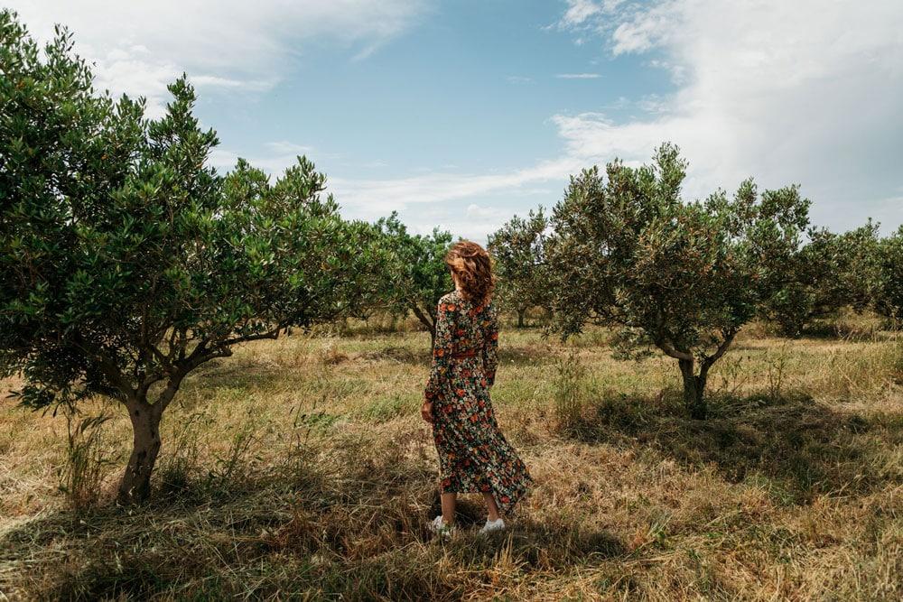 visite oliveraie de Beaucaire