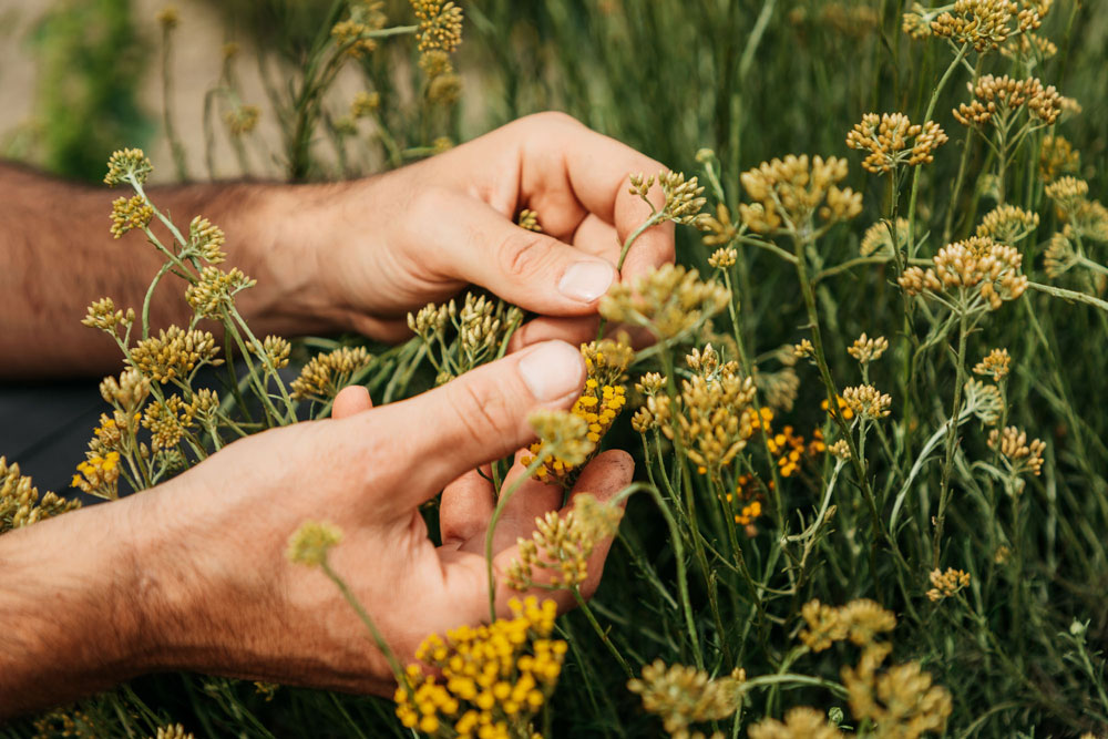 visiter fabrique huiles essentielles bio dans le Gard